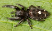 bold-jumper-Female