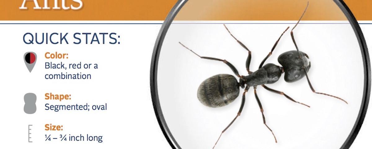 carpenter-ant-pest-id-card_front