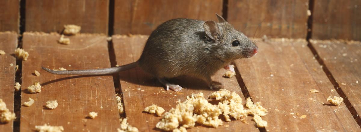 main_mice-banner-crumbs