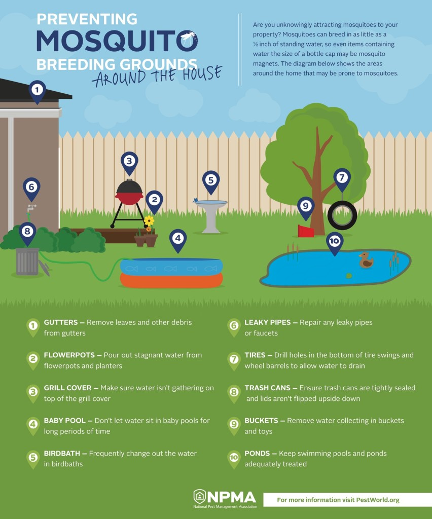 mosquito-breeding-grounds
