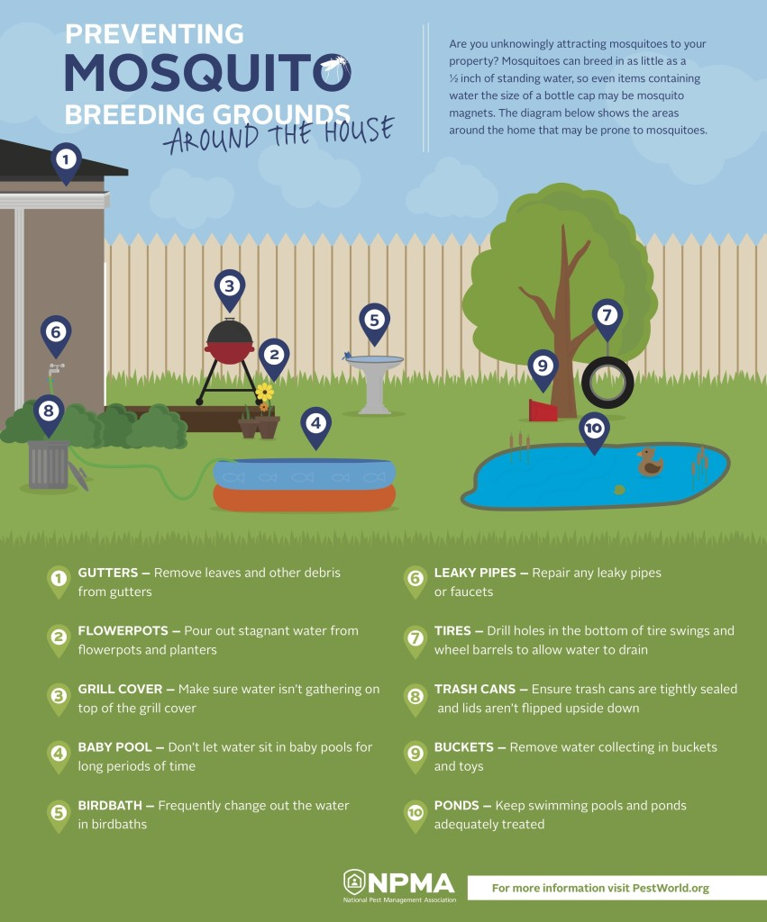 mosquito-breeding-infographic-040216