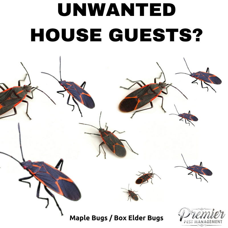 how to get rid of wood bugs in my house