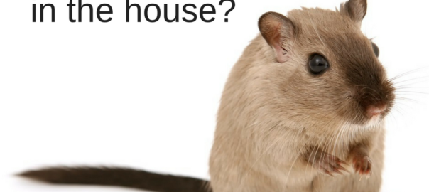 mouse_in_the_house-_1