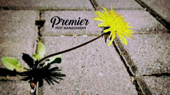 spring pest control tips regina saskatchawan