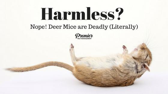 Deer Mice hantavirus saskatchewan