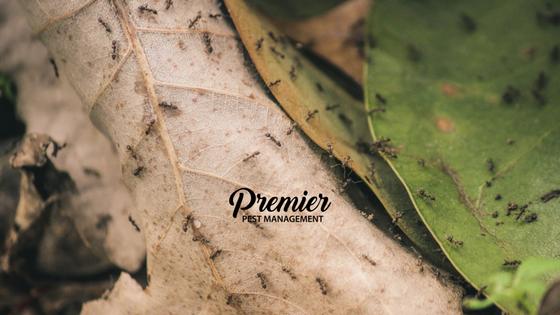 Regina, pest management, pest control, bugs, outdoors, ants, saskatchewan