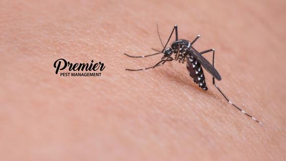 Regina, Saskatchewan, Insect, Bug Bites, Insect Bites, Summer