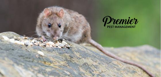 regina, saskatchewan, pest control, pest management, mice, rats, cockroaches