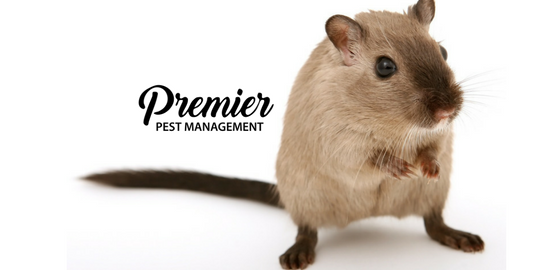 regina, saskatchewan, rodents, fall, pest control, mice, rats