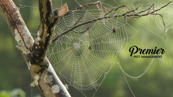 Regina, pest management, Saskatchewan, spiders, pest management, fall