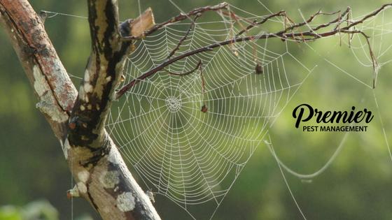 Regina, pest management, Saskatchewan, spiders, pest management, fall