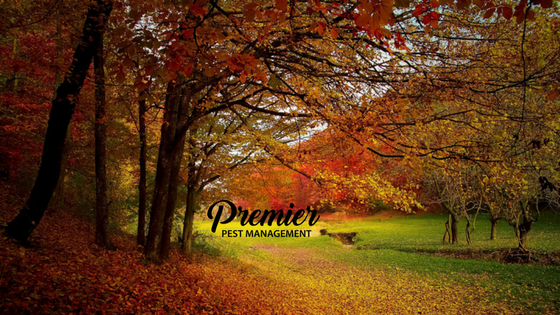 keep pests away, pest control Canada, pest control Regina, pest management, pest problem, regina