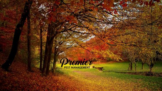 keep pests away, pest control Canada, pest control Regina, pest management, pest problem, regina