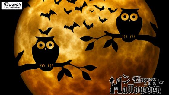 Halloween PP